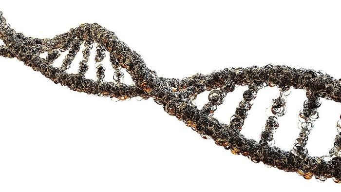 Starnutie organizmu a teloméry