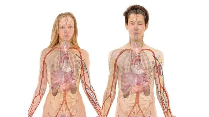 Teloméry a jednotlivé orgány
