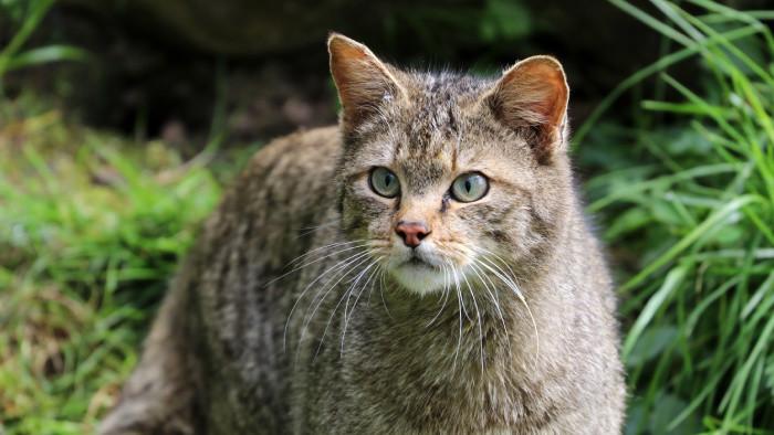 ZOO Bojnice - Hľadáme mačku, pozor, divú!