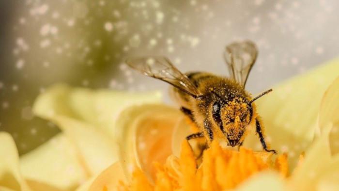 Jazykové okienko - včelí úľ