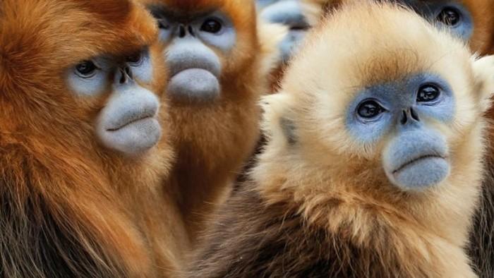 Spoznajte zvieratá Ázie v stredu s Dvojkou