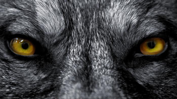 Vlci v bojnickej ZOO