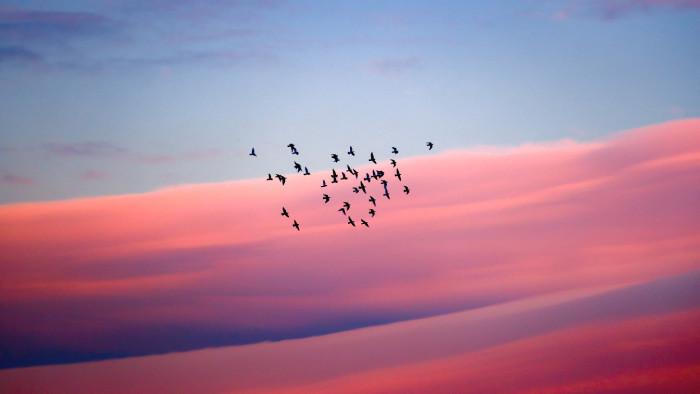 Jesenná migrácia vtákov