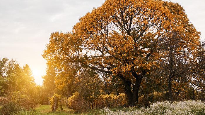 Mesto Bratislava si vytýčilo cieľ zasadiť 10 tisíc stromov
