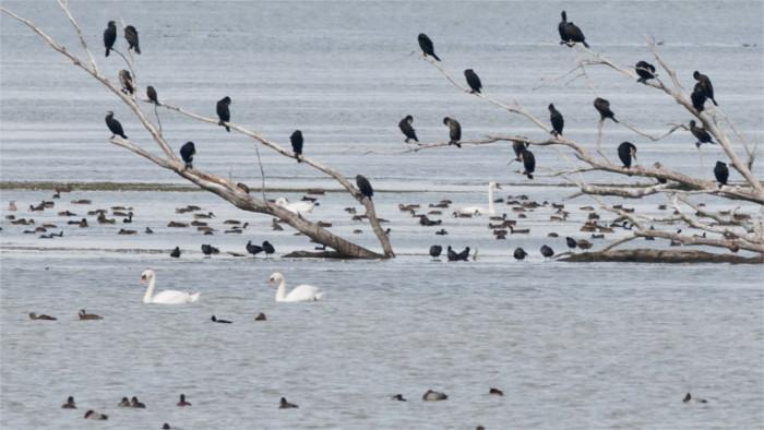 Птицы возвращаются на свои насиженные места