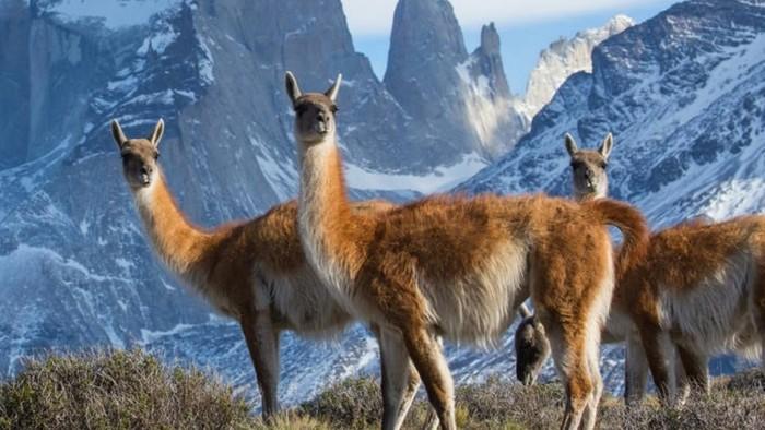 Dvojka predstaví zvieratá, na ktoré je aj bujná fantázia krátka
