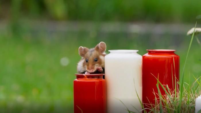 Online výzva: Zostaňte doma a zabavte sa s vtipnými zvieratkami