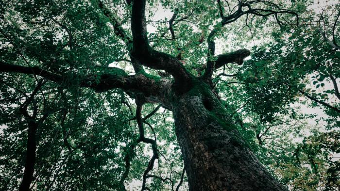 Aktuálne výsledky ankety Strom roka