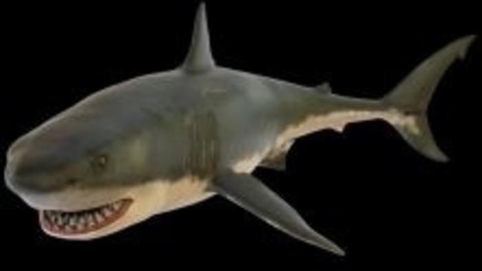 Čo by bolo, keby... sme stretli žraloka?