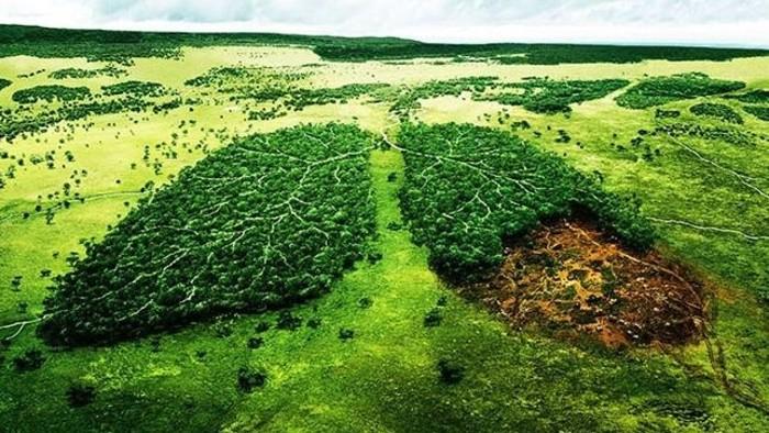 Megállítható-e az erdőírtás?