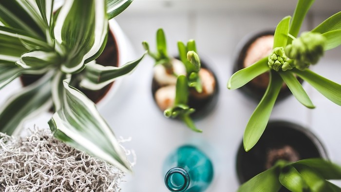 Starostlivosť o izbové rastliny