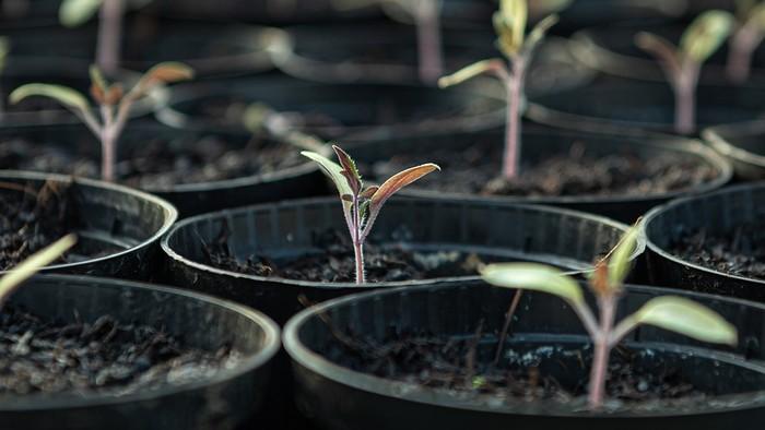 Jarný výsev semienok