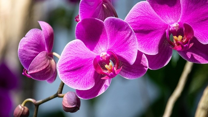 Lišajovce - Orchidey 3