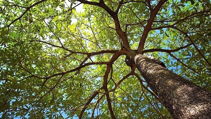 Aj stromy spolu komunikujú. Tajomstvo ich reči odhalené
