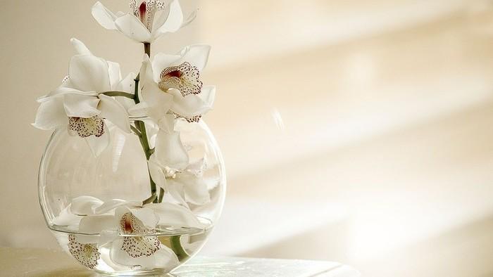 Lišajovce - Orchidey 2
