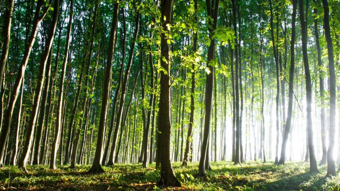 Zelená príroda