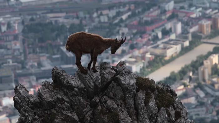 Divoký Innsbruck
