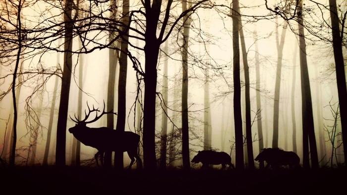 Nezabudnutý - hra o lesníkovi Jozefovi Dekretovi Matejovie