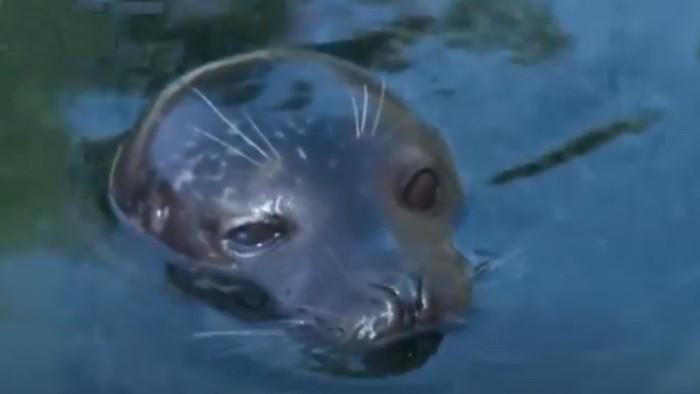 Vnútrozemské tulene