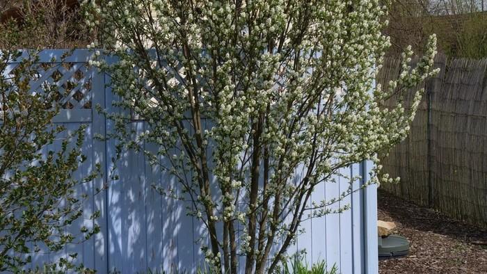 Zo zeme (s Barbarou) / Význam stĺpovitých drevín v tvorbe záhrady