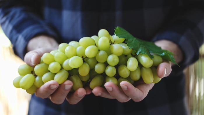 Ako správne strihať hrozno, aby bol vinič zdravý a produktívny každú sezónu