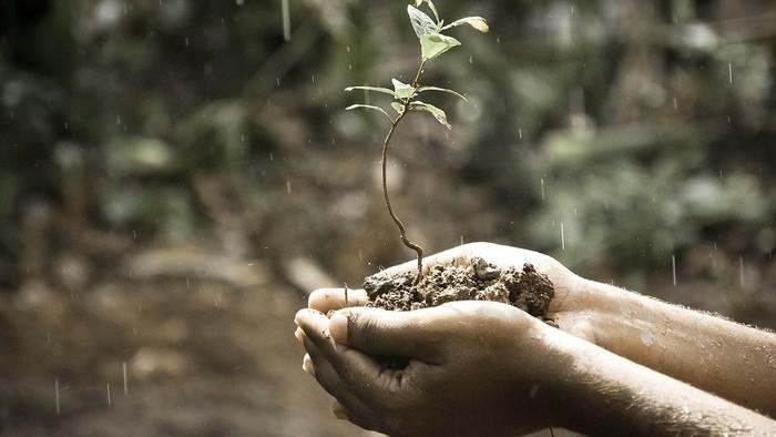 Zo zeme (s Barbarou) / Fosfor v živote rastliny