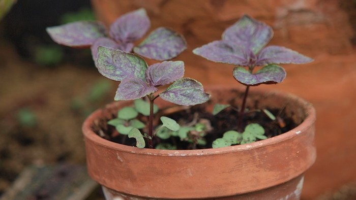 Zo zeme (s Barbarou) / Základy pestovania byliniek