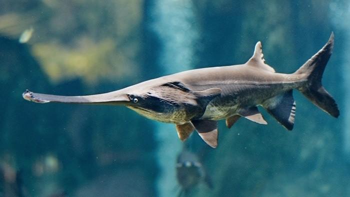 K najväčšiemu poklesu biodiverzity dochádza pri sladkovodných rybách