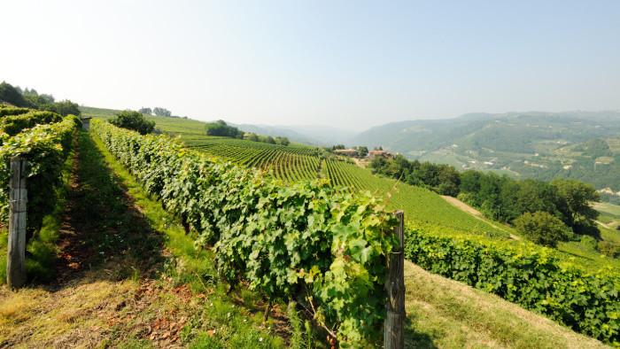 Zanedbávaním starostlivosti o vinohrady strácame kus kultúrneho dedičstva