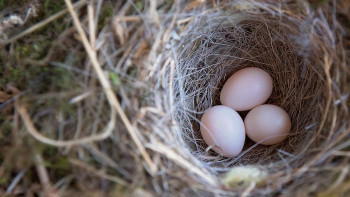 Bude slovenských vajec pred Veľkou nocou dostatok?