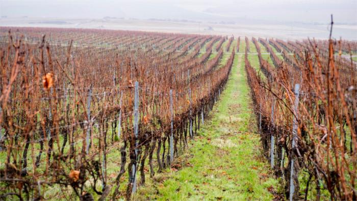 El sector vitivinícola eslovaco pide una solución cuanto antes