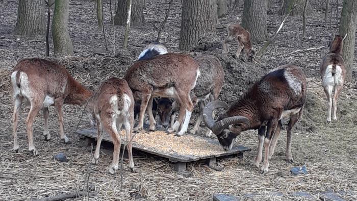 Mini ZOO v lesoparku Berek má nové prírastky
