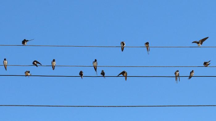 1. apríl - Svetový deň vtáctva