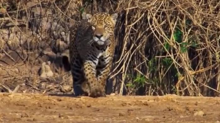 Krajina jaguárov