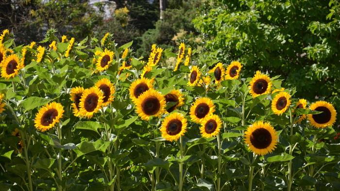 Zo zeme (s Barbarou) / Rozdelenie rastlín podľa dĺžky života