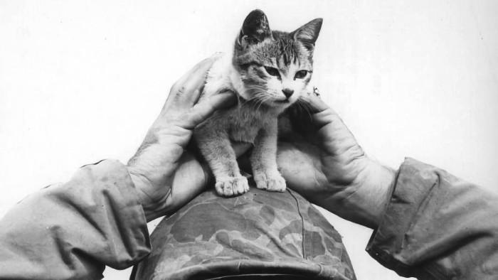 History check_FM: Mačky, bojovníci proti nacizmu