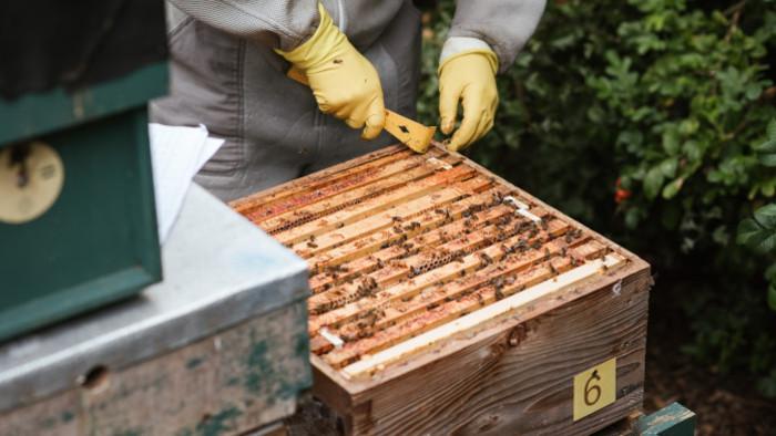 Vzdelávanie včelárov