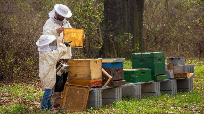 O včelách a ľuďoch