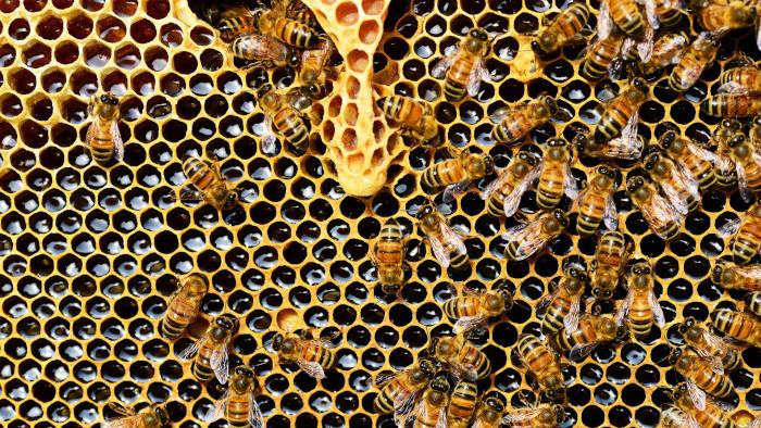 Vzácne včelie produkty
