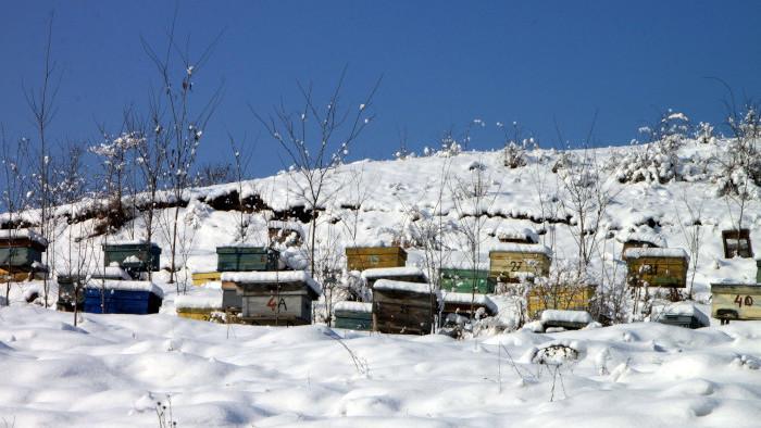 Zimná práca včelárov