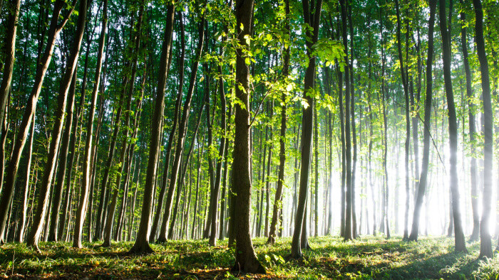Vo Vrbovciach sa starajú o staré a sadia nové stromy