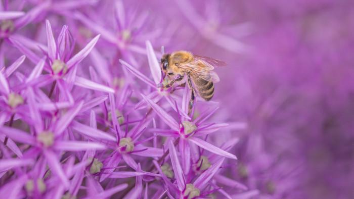 Význam včiel