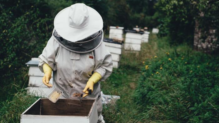 Vhodné umiestnenie veľkého včelína