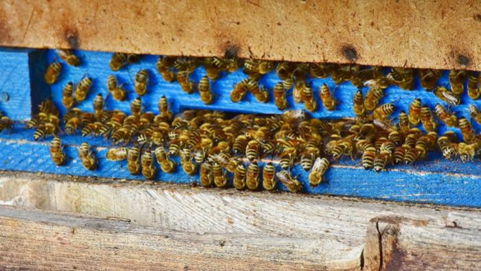 Problém spádu včelstiev