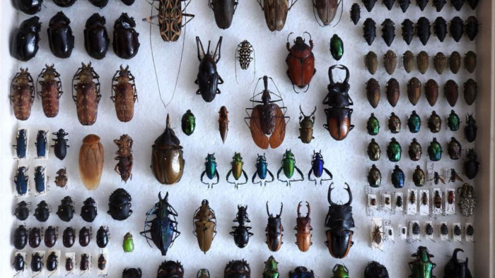 Nová kolekcia hmyzu v múzeu na Spiši