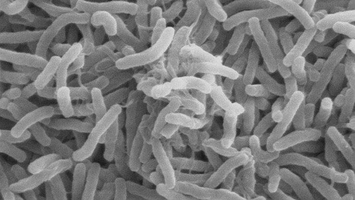 Bacteria that suggest the possibility of extra-terrestrial life