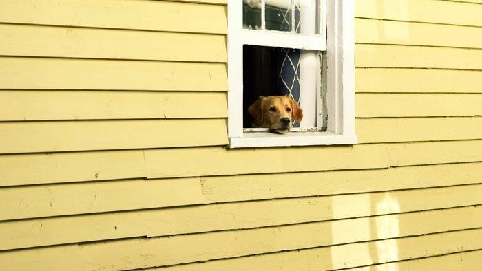 Za dverami susedov