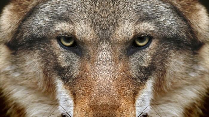 Ochranár Juraj Lukáč: Vlka sa nebojte