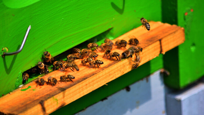 Administratíva pred včelárením