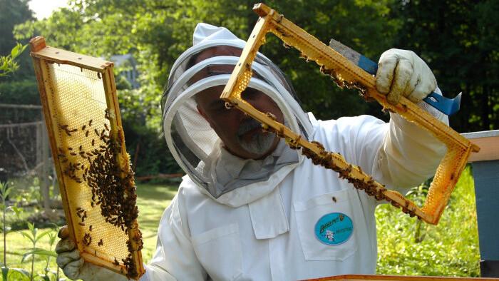 Včelie zásoby na zimu
